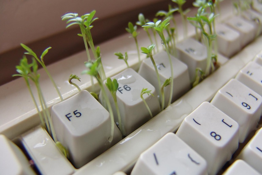 keyboard with growing plants